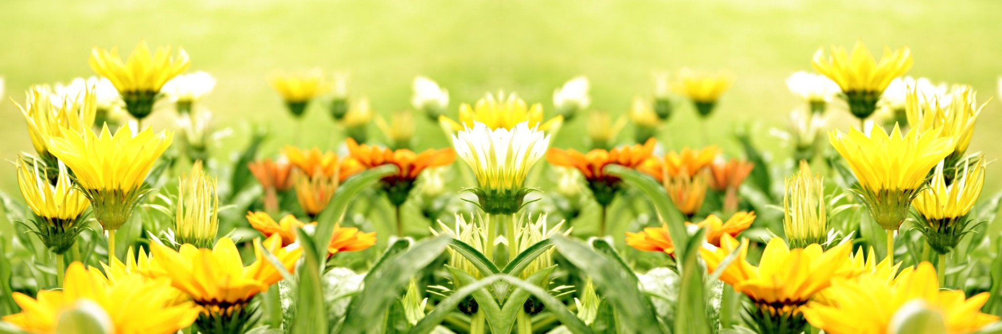 Yellow Flowers Field | Best Wallpaper HD