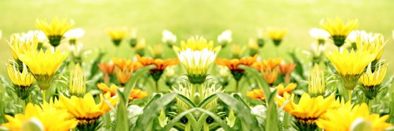 YELLOW-FLOWER-FIELD-GREENARY